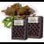 Wierookhars Basil/Amber in houten doosje
